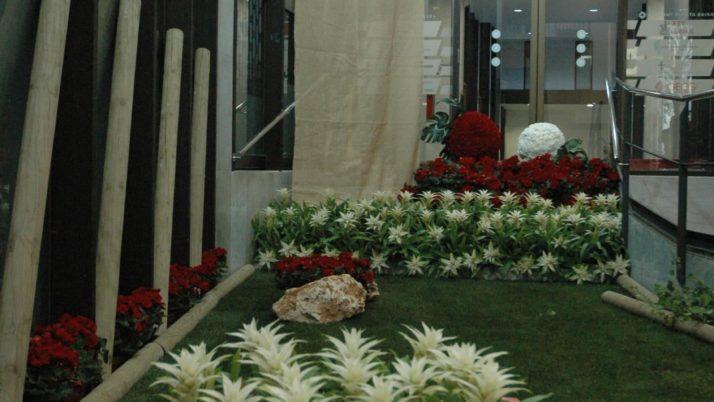 El GEIEG participa al 'Temps de Flors' amb l'escena '100 i més…'